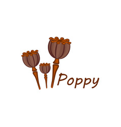 poppy flower logo design template vector image