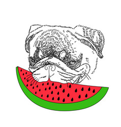 Dog with red watermelon cute pug portrait vector