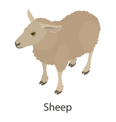 Sheep icon isometric style vector