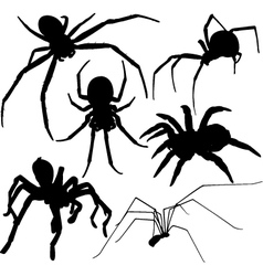 Spider silhouettes on white background vector image vector image