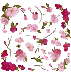 set of isolated spring flowers and branches vector image vector image