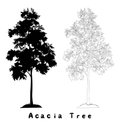Acacia tree silhouette contours and inscriptions vector