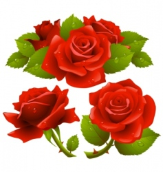 roses collection vector image
