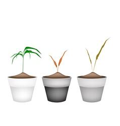 Three green grass in ceramic flower pots vector