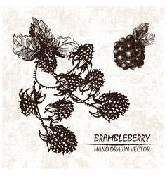 digital detailed brambleberry hand drawn vector image