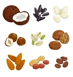 Nuts grain and kernels icons vector image vector image