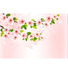 Spring background with blossoming sakura branches vector image