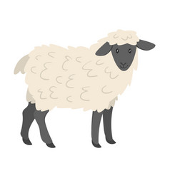 Farm animal - sheep vector