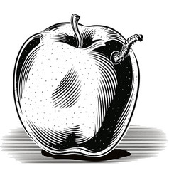 Golden delicious apple ripe with a caterpillar vector