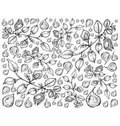 hand drawn of pod of chick peas background vector image