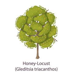 Honey locust icon flat style vector