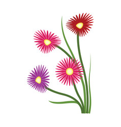 orange purple and red aster flowers on white vector image