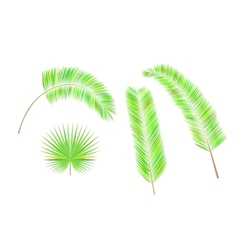 Set of colorful palm leaves vector