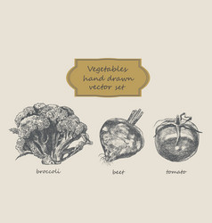 vegetables hand drawn set broccoli beet vector image