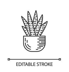zebra cactus in pot linear icon vector image