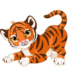 Playful tiger cub vector image vector image