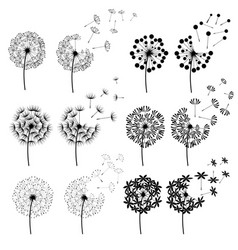 Abstract dandelions for spring season vector