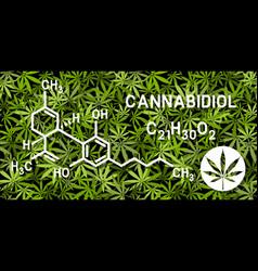 cannabidiol molecular structures on marijuana vector image