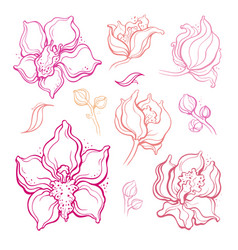 floral set orchids beautiful hand drawn design vector image