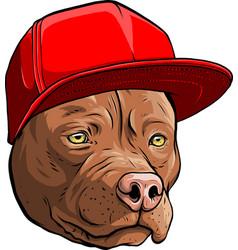 Pitbull dog in cap vector