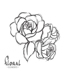 beautiful roses on a white background vector image vector image