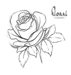 sketch of roses vector image vector image