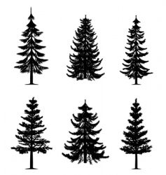 Pine trees collection vector