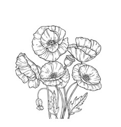 poppy bouquet line art poppies flower sketch vector image