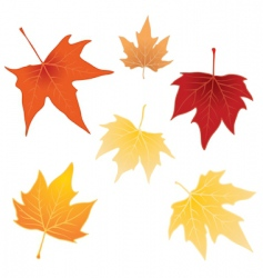Separate autumn leaves vector