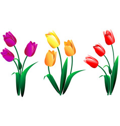 Set different beautiful bouquets tulips vector
