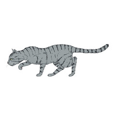 Sneaking gray striped cat vector