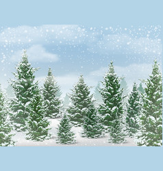Winter fir tree forest vector