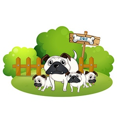 A group of bulldogs near the fence vector image vector image