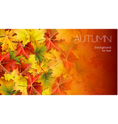 autumn background for your text with foliage vector image
