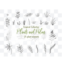 collection summer plants and palms vector image