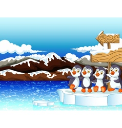 Funny penguins under board sign with snow mountain vector