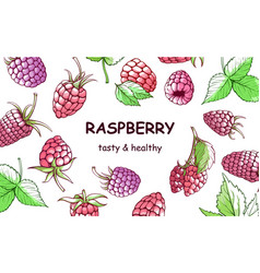 raspberry hand drawn background sweet and tasty vector image