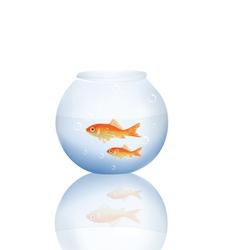 goldfish in water vector image vector image