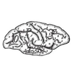 Cerebellum vintage vector