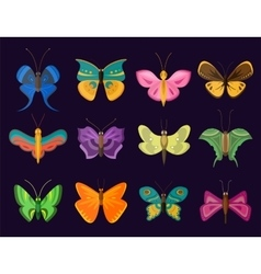 Colorful butterflies flat style collection vector image