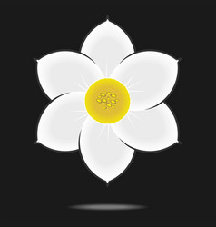 Narcissus flower isolated on black background vector