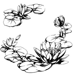 Water Lily Tattoo Vector Images Over 270