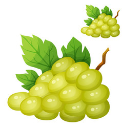White grape cartoon icon isolated on whte vector