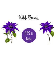 wild flowers collection vector image
