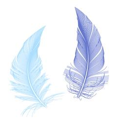 Blue birds feather vector
