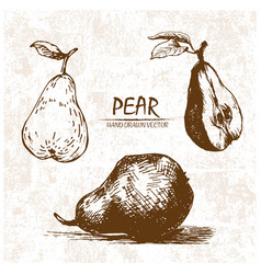 digital detailed pear hand drawn vector image