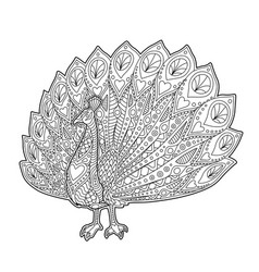 adult coloring book page with funny peacock vector image