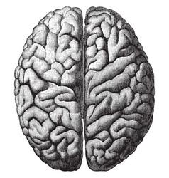 Cerebrum vintage vector