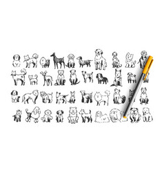 dogs doodle set vector image