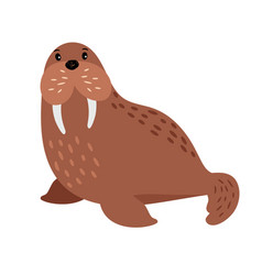 Walrus cartoon animal vector